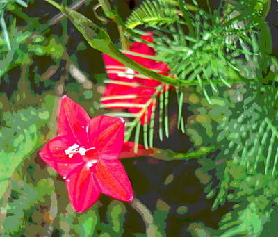 Impressionist Style Photograph - Cpress Vine Blossoms And Foliage by Padre Art