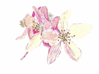 Painting - Crab Apple Blossom by Barbara Moignard