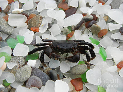 Photograph - Crab On Glass Beach by Jim And Emily Bush