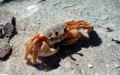 Photograph - Crab Walk by Ellen Heaverlo