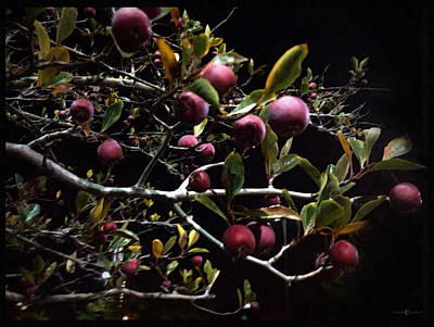Photograph - Crab Apples At Night by Tim Nyberg