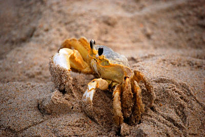 Art Print featuring the photograph Crabby by Linda Mesibov