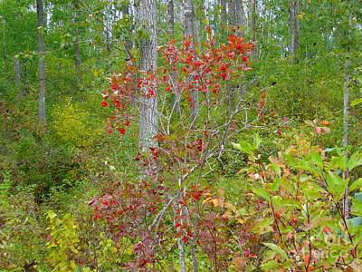 Art Print featuring the photograph Cranberries With Early Autumn Colors by Jim Sauchyn