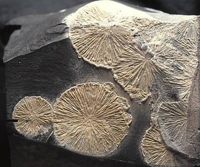 Crandallite Mineral Art Print