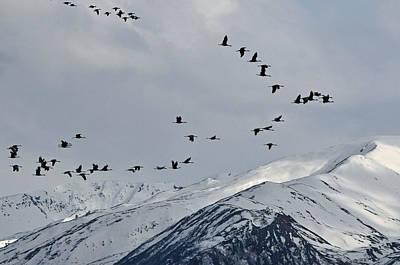 Cranes Contour Flying Original