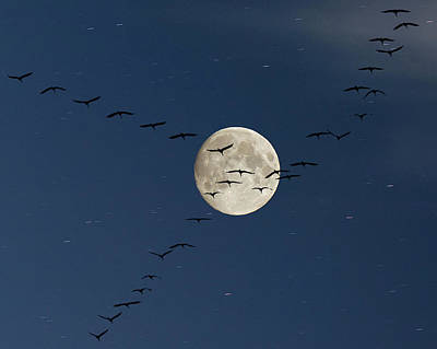 Of Birds Photograph - Cranes Flying To Moon by Sebastian Schneider