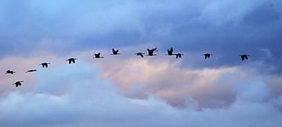 Photograph - cranes in flight III by Diana Douglass