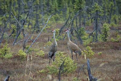 Cranes Original