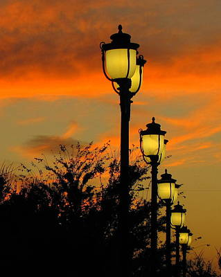 Cranes Roost Lights Art Print