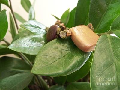 Wood Necklace Photograph - Crawling by Diana Lovett