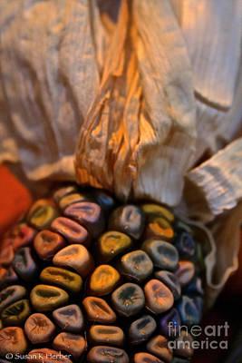 Photograph - Crazee Corn Colors by Susan Herber