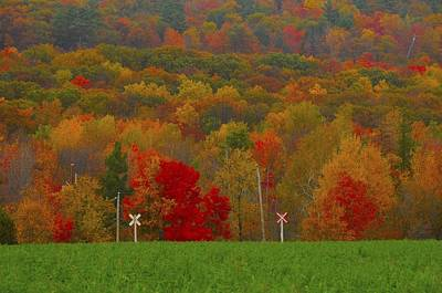 Gatineau Park Photograph - Crazy Fall Colors by Rawimage Photography