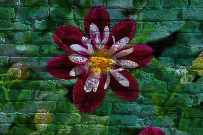 Crazy Flower Over Brick Art Print by Eric Liller