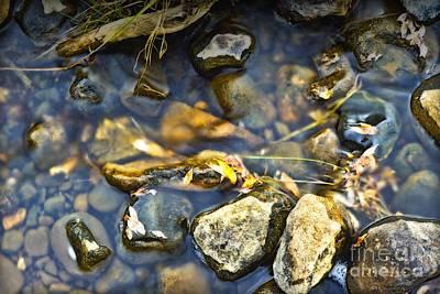 Photograph - Creek Bed by Edward Kovalsky