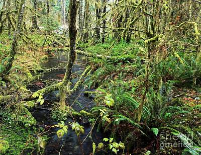Photograph - Creek In The Rain Forest by Adam Jewell