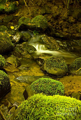 Photograph - Creek Of Serenity by Tyra  OBryant