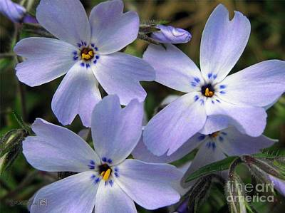 Art Print featuring the photograph Creeping Phlox by J McCombie