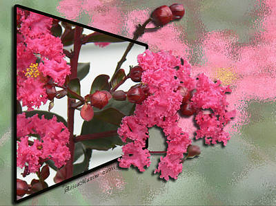 Photograph - Crepe Myrtle Oob by Ericamaxine Price
