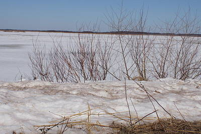 Photograph - Crex Meadows In Winter 1 by Ron Read