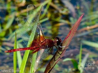 Photograph - Crimson Dragon by John Burns