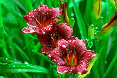 Crimson Lilies In April Shower Art Print