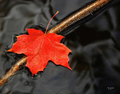 Photograph - Crimson Maple Leaf by Peg Runyan