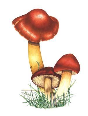 Crimson Waxcap Mushrooms, Artwork Art Print