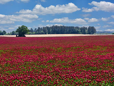 Crimson Clover Photograph - Crimson Wonderland  by Kathy Clark