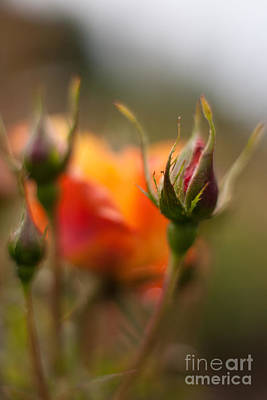 Nature Photograph - Crisp New Buds by Mike Reid