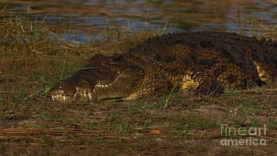 Photograph - Croc by Mareko Marciniak