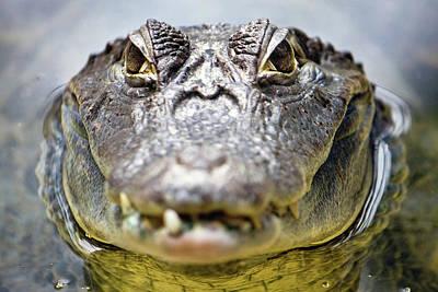 Crocodile Eyes Art Print by Ellen van Bodegom