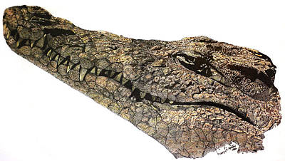 Crocodile Mixed Media -  The Crocodile by Nancy Mergybrower