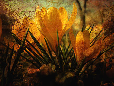 Crocus In Spring Bloom Art Print by Ann Powell