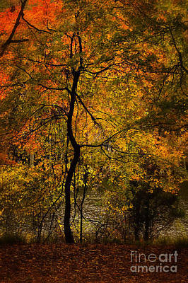 Photograph - Crooked Tree At Beaver's Bend by Tamyra Ayles