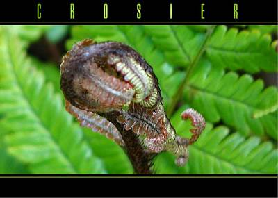 Photograph - Crosier by Chris Anderson