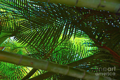Photograph - Crossing Palms And Bamboo by Herb Paynter