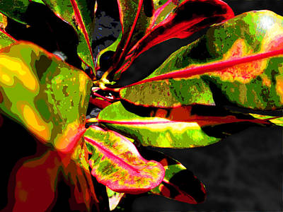 Photograph - Croton Abstract I by Ginny Schmidt
