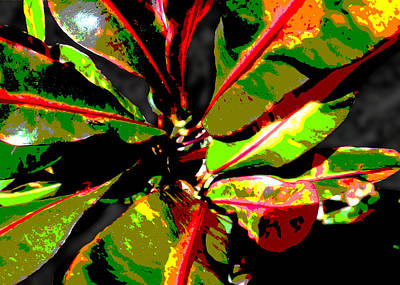 Photograph - Croton Abstract I I by Ginny Schmidt