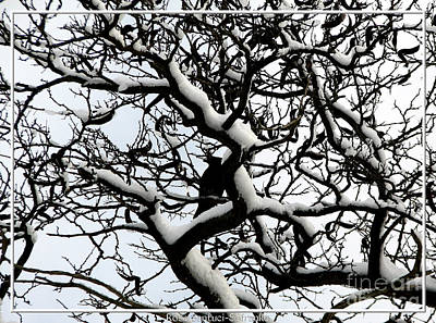 Photograph - Crow Camouflaged In Snow Covered Tree by Rose Santuci-Sofranko