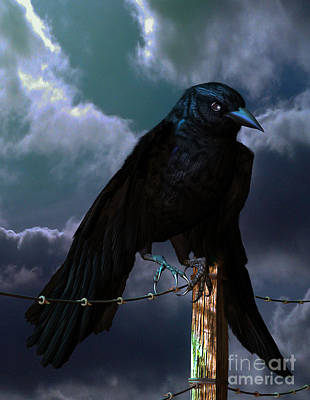 Digital Art - Crow by Georgina Hannay