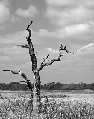 Art Print featuring the photograph Crow In Dead Tree by Brooke T Ryan