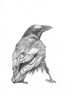Drawing - Crow by Kazumi Whitemoon