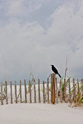 Crow On Dune Fence Art Print by Kelley Nelson