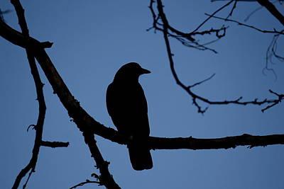 Crow Silhouette Art Print