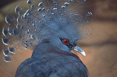 Photograph - Crowned Pigeon by John Foxx