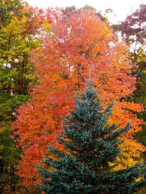 Crowning Glory Of Autumn Print by Randy Rosenberger