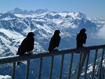 Crows On Top Of Mount Titlis Switzerland Art Print