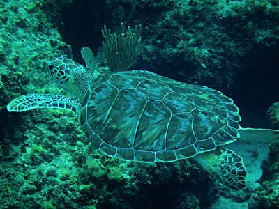 Underwater Photograph - Cruisin' With Crush II by Kimberly Perry