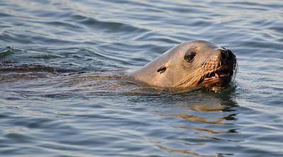 Ocean Mammals Photograph - Cruising The Dock by Fraida Gutovich