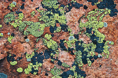 Crustose Photograph - Crustose Lichens On Granite, Killarney by Mike Grandmailson